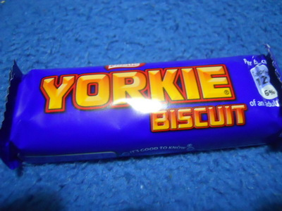yorkie, chocolate biscuit